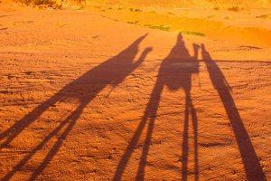 Shadow-Camel